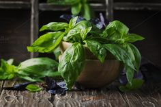Bunch of fresh basil by oxana.denezhkina on @creativemarket