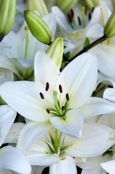 Caring for Potted Easter Lilies