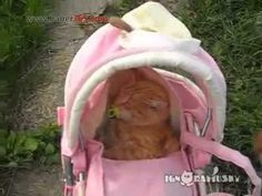 I remember doing this with Fluff a few times when I was a kid... she HATED it lol! It was kind of hard to keep her in there lol! I love & miss you still Fluffy! <3