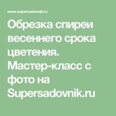 Обрезка спиреи весеннего срока цветения. Мастер-класс с фото на Supersadovnik.ru
