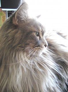 Beautiful cat named Tsunami