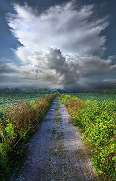 'The Only Way' -Phil Koch