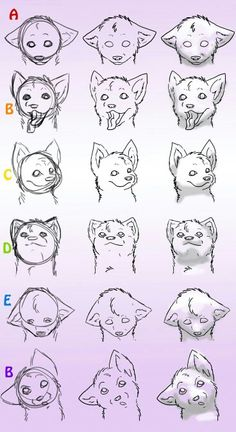 Wolf pup face faces expressions