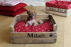 How to Choose the Perfect Dog Bed For Your Pet Puppy Beds, Pet Beds, Animals And Pets, Cute Animals, Diy Dog Bed, Dog Houses, Diy Stuffed Animals, Pet Accessories, Wooden Boxes