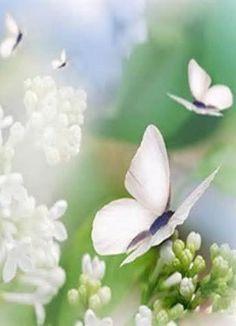 #white #wanderbucket #butterfly