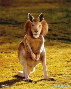 leeuw, kangoeroe