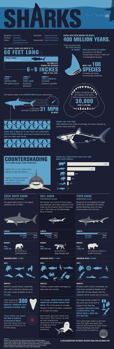 Infographic all about sharks!