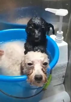 Cute Funny Dogs, Cute Funny Animals, Cute Baby Animals, Animals And Pets, Wild Animals, Funny Cat Photos, Funny Animal Pictures, Cute Ducklings, Dog Wash