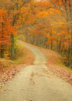 Shawnee State Forest Another joy of growing up in Southern Illinois. Great Places, Places To See, Beautiful Places, Beautiful Scenery, Fall Pictures, Nature Pictures, Shawnee State, Southern Illinois, Autumn Scenery