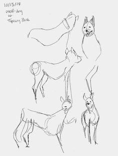 [Wolf-Dog Drawings!] Some life drawings from yesterday!