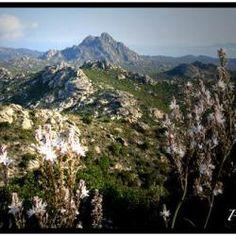 Désert Des Agriates Saint Florent Corse