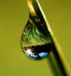 Dewdrops Bliss