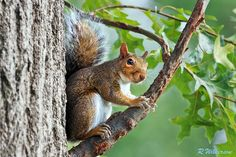 Chillin'  #500px #squirrel #photography #nature