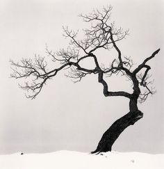 Beautiful Black and White Photos of a Sideways Japanese Tree by Michael Kenna - My Modern Metropolis Japanese Tree, Black And White Landscape, Black White, Orange Aesthetic, Tree Silhouette, Photo Projects, Tree Art, Landscape Photographers, Community Art