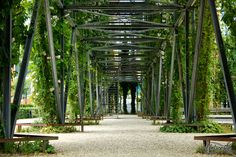 Green alley Picture taken in MFO Park- Zürich
