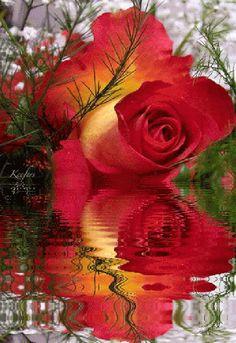 Красивая роза...