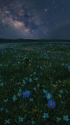 星空下的那片花海, The sea of flowers under the stars, by 亦雷Nssea. Night Sky Wallpaper, Scenery Wallpaper, Cute Wallpaper Backgrounds, Tumblr Wallpaper, Nature Wallpaper, Star Photography, Landscape Photography, Nature Photography, Pastel Iphone Wallpaper