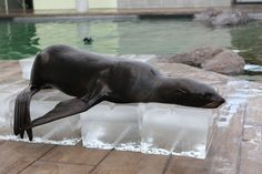 Animals know how to stay cool this summer! #islandheat