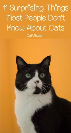 Think you know everything about felines? Think again! We bet these 11 cat facts have at least a few surprises in store for you! Check them out!