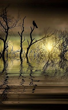 Twilight Reflected | Amazing Pictures