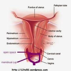Opciones menstruales: La virginidad y la copa menstrual