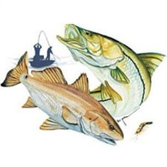 Guy harvey redfish and speckled trout saltwater for Saltwater fishing clothes
