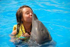 dolphin ❤