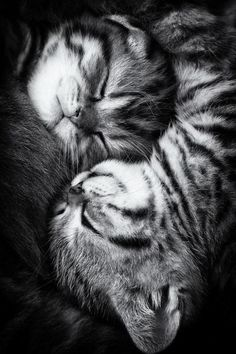 """""""No matter how much the cats fight, there always seem to be plenty of kittens. """"  ― Abraham Lincoln"""