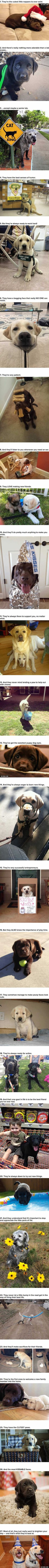27 Reasons Labradors Are The Cutest Creatures In The Galaxy
