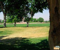 Cultivar árvores é uma ótima saída para amenizar as altas temperaturas, além de deixar seu jardim ainda mais encantador!