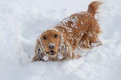 愛犬と雪遊びするときの5つの注意点 - ネタりか