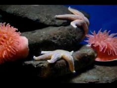 Sea stars in time lapse - YouTube