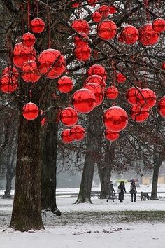 Stunning Picz: Christmas in The Trees