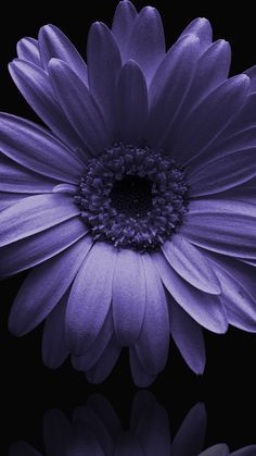 All Flowers, Exotic Flowers, Amazing Flowers, Pretty Flowers, Purple Flowers, Flower Phone Wallpaper, Purple Wallpaper, Flower Pictures, Pretty Pictures
