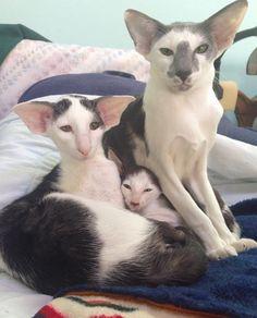 """yova on Twitter: """"I'm a big fan of these stupid looking cat things I follow on Instagram https://t.co/o8BGdWF2Xz"""""""