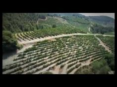 Los nuevos vinos de Grecia -