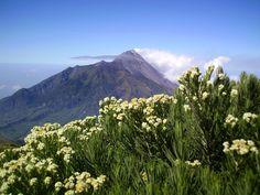 Taman Nasional Gunung Merbabu Jawa Tengah