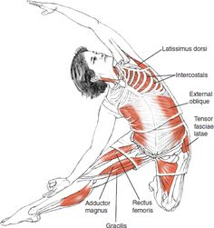 Parighasana (Gate Pose). Anatomy of a yoga pose. Shows which muscles are engaged.