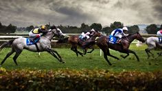 Free Horse Racing Tips at Horse Racing Tips Australia