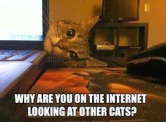 cats meme - troll face comics