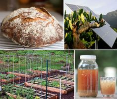 The Simple Life: 14 Steps to an Urban Homestead