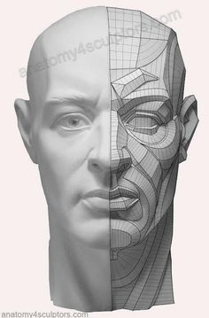 Head & Neck Anatomy anatomy for sculptors - Sök på Google