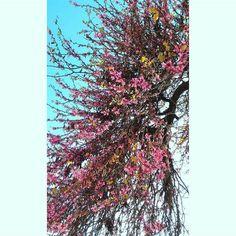 by http://ift.tt/1OJSkeg - Sardegna turismo by italylandscape.com #traveloffers #holiday | Iglesias #edophotography #sardegnaofficial #lovesardegna #summer #sardegna #iglesias #photo #flowers #fotografia #bravoedoardosteri Foto presente anche su http://ift.tt/1tOf9XD | March 31 2016 at 12:08AM (ph dani5763 ) | #traveloffers #holiday | INSERISCI ANCHE TU offerte di turismo in Sardegna http://ift.tt/23nmf3B -