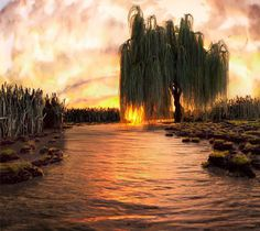 weeping willow tree natural formations