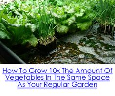How To Grow 10x The Amount Of Vegetables In The Same Space As Your Regular Garden
