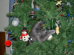 Cats love to attack anything that's shiny, so during Christmas, the target is pretty obvious. The funny thing is that cats are one of the few creatures on this planet that can completely destroy your Christmas and make you go 'Aaaw' at the same time. Cat Christmas Tree, Christmas Animals, Christmas Humor, Christmas Holidays, Xmas, Celebrating Christmas, Crazy Cat Lady, Crazy Cats, Christmas Pictures