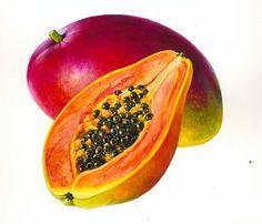 Példák megbízásából illusztrációk Rosie Sanders, botanikus művész.