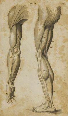 Preparamos uma compilação com os melhores exemplos de anatomia para o estudo em desenho, pintura e escultura - mãos, pés, braços e pernas e muito mais!