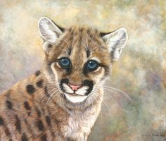 A cute little cougar cub, that will become a dangerous predator. Animal art is always in vogue. Animal Paintings have always been popular. Nature art and Nature paintings have also been well appreciated.