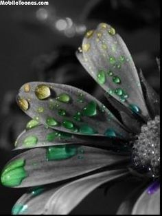 Gray Flower With Colorful Water Drops Mobile Wallpaper
